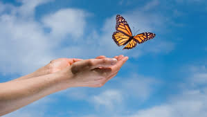 butterflyhands
