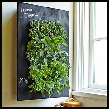 chalkboardwallplanter